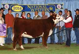 She is sired by 88X out of super cow CRANE Style Points 945, the dam of Kool Aid Points and many others. EPD s... CE: 5.95 BW: -0.15 WW: 53 YW: 77 MILK: 42 M&G: 69 CHEZ AA Next Level, sire of Lot 41.