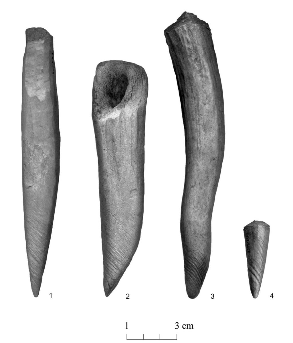 Late Bronze Age bone crafting in the eastern Baltic 31 Fig. 8. Antler tines with spiral use wear from Asva, Estonia (AI 4366: 1883, 1772, 1823, 1217).