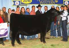 PROVEN QUEEN SISTERS FCF Proven Queen 419 This maternal sister to Lots 16 and 17 was named Grand Champion Female of the 2016 National Western Stock Show.