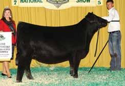 THE PROVEN QUEEN COW FAMILY PVF Proven Queen 4014 This many times champion is a full sister to Lots 19, 20 & 21.