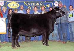 She is also a maternal sister to the $25,000 one-half interest PVF Visionary 3082, the $27,000 PVF Lucy 1198, the $25,000 PVF WB Lucy 2079, the $28,000 PVF Lucy 4175, and the $35,000 one-half