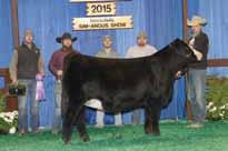 Owned By Tanner Howey CMFM Zenyatia 410C OBCC Brush Creek Daughter