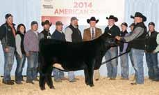 OBCC Legend 918B 2015 Reserve Champion AJSA Eastern Regional Owned by Campbell Show Calves/ Jackson