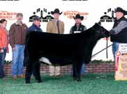 Favorite OBCC Wakanda 907B 2015 Missouri State Fair Reserve Senior Heifer Calf Owned By Nick Andrews
