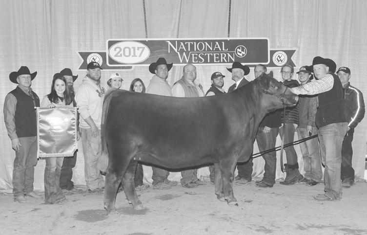 AHL BLACK ROSE 163Y Embryos AHL Rose 5087C Full sib of embryos selling 2017 NWSS Grand Champion Red Angus Female 89 AHL Black Rose 163Y Embryos BD: 3/19/11 RAA 1456926 Tattoo: 163Y Black (Red