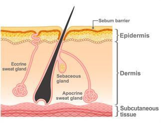 THE SKIN BARRIER Source: https://www.otsuka.co.