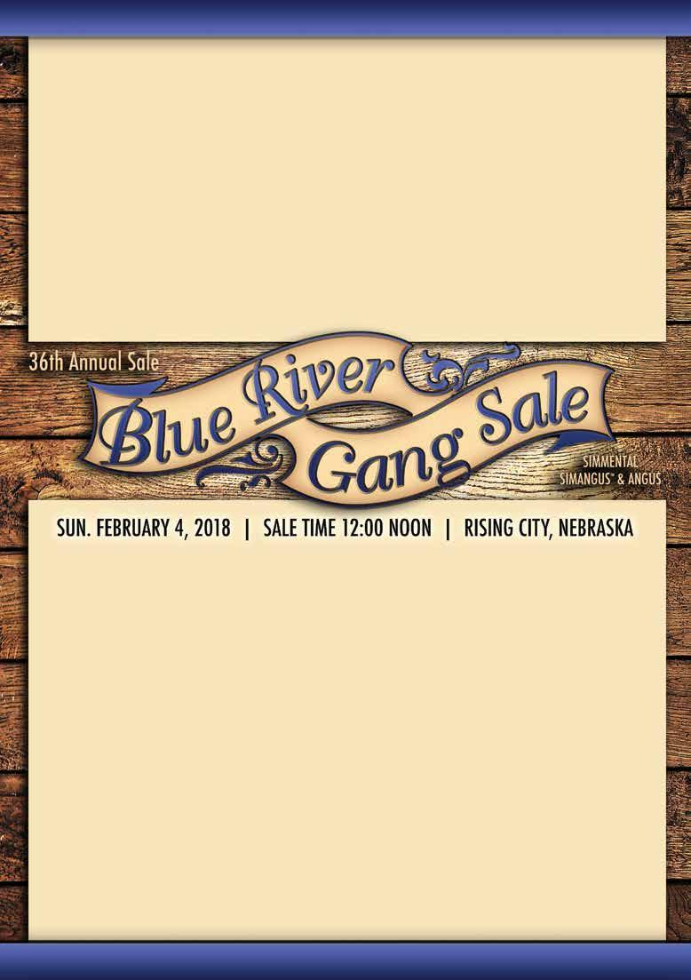 3th Annual Blue River Gang Sale - Rising City, Nebraska Sale Schedule Saturday, February 3rd: Cattle on display :00 Noon-:00 pm Sunday, February 4th: 3th Annual Blue River Gang Production Sale :00