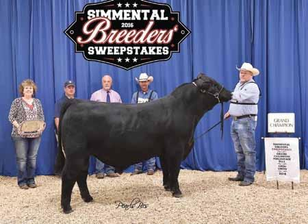 Dam of CMFM Firefly 13C who was Division NAILE, American Royal & Fort Worth 3rd Overall Bred/Owned AJSA Classic Owned by Tanner