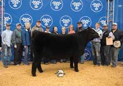 MG/GSC DIAMOND 12D Grace McClain Many time champion OBCC Wakanda 90B, Dam OBCC Unfinished Business, Sire Congratulations Show Winners.