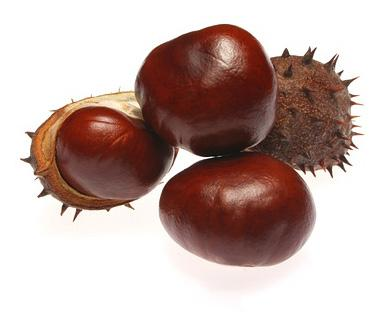 HORSE CHESTNUT EXTRACT BOT-HOCHEX-01 Botanical Extracts Description: Natural Horse Chestnut extract made from whole plant. Other parts, for example, the bark have been used as a yellow dye.