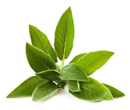 SAGE EXTRACT BOT-SAGE-01 Botanical Extracts Description: Salvia Officinalis (sage) derived from the leaves and whole plant of sage. Contains 20% extract dissolved in water and glycerin.
