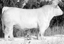 Charolais KEYS TEN-ACIOUS 166S Reg. #:M724532 BD: 03/10/06 Tattoo: 166S BW WW YW Milk Marb RE FAT 2.3 45 87-17 -0.16 0.90 0.