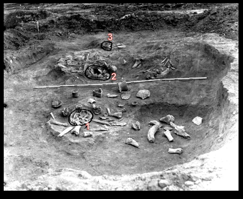 Figure S1.5: Picture of the Early Neolithic pit no. 3 (1995) from the Carcea site and location of three human skulls (after Haimovici 2006, modified).