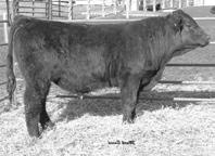 REN NIGHT TIME S Hart Limited 0018 SAF LTD 0018 Hart Miss Fame 0 Reynoldson Traveler Triple T Outlaw Reynoldson Heart Throb S is a very deep sided herd sire prospect. M -0.9 9 8 M. 18-1.