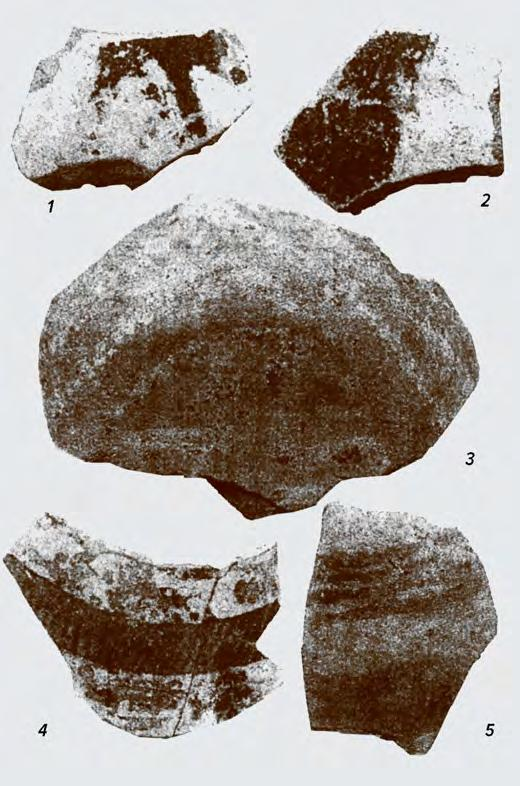 78 CHAPTER IV 1 Fig. IV. 29a. Tărtăria, Zau II pottery from I. Paul s excavations. Fig. IV.29b. Tărtăria: 1) Zau I pottery from pit house B1 (after Horedt 1949, p. 53); 2) from N.