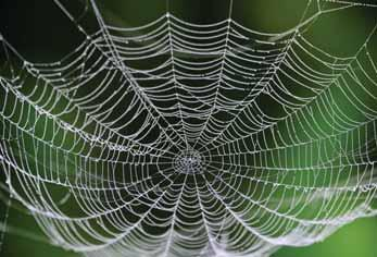 Researchers develop method for making artificial spider silk A team of architects & chemists from the University of Cambridge has designed super-stretchy and strong fibres which are almost entirely