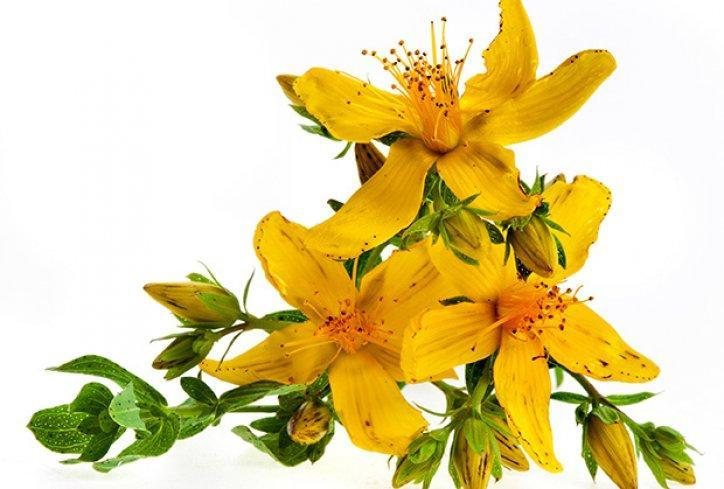St. John`s wort acts as an astringent and promotes skin regeneration.