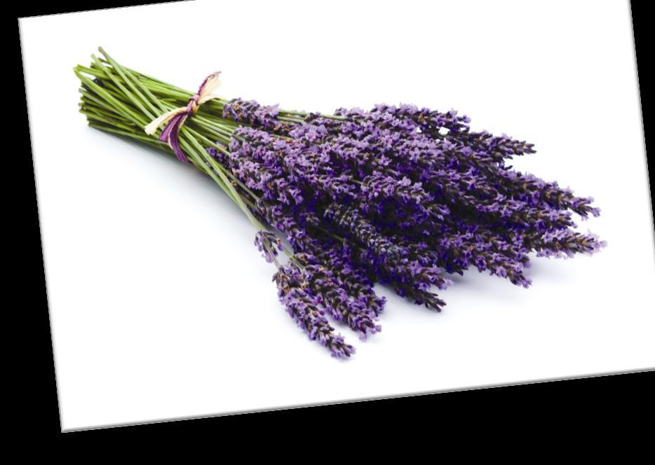 lavender Lavender has a scent that s a wonderful blend of fresh, floral, clean, and calm.