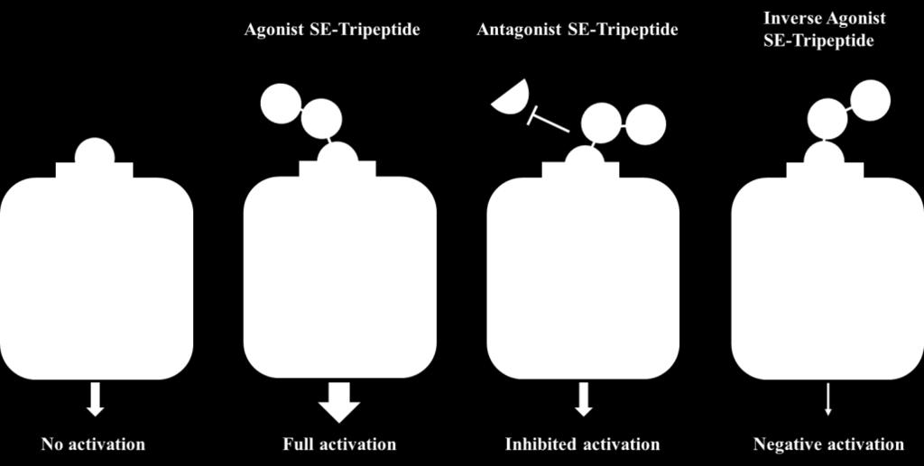3) Our SE-tripeptides properly interact with specific target proteins.