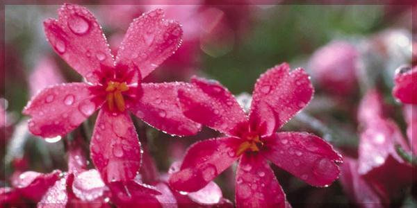 April Showers... April Newsletter Greetings!...bring May flowers. The days have grown longer finally, the showers are lessening, and the last of winter is finally behind us.