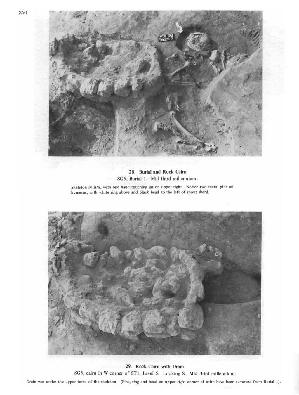 XVI 28. Burial and Rock Cairn SG5, Burial 1. Mid third millennium. Skeleton in situ, with one hand touching jar on upper right.