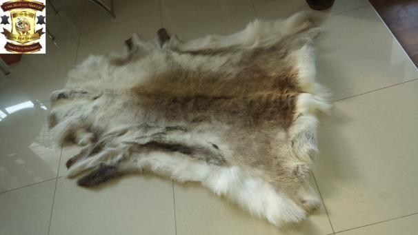 15. Decorative hides of Scandinavian reindeer : A decorative hide of the Scandinavian reindeer is a genuine one, ideal for