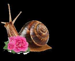 All products are enriched with snail extract and organic rose water - Rosa Damascena.