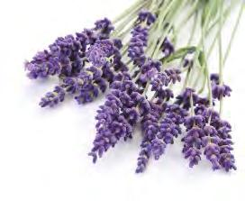 Essential oil uses Uses Essential oils are used for a very wide range of emotional and physical wellness applications.