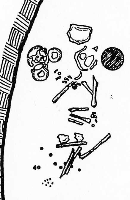 6. Buttons, Pins, Clips and Belts Inconspicuous Dress Accessories 147 Fig. 6.4: Drawing of the buttons find spot, Perati (Attica), Grave 16. Fig. 6.5: by one of the crocus-gatherers, Xeste 3, Akrotiri (Thera).