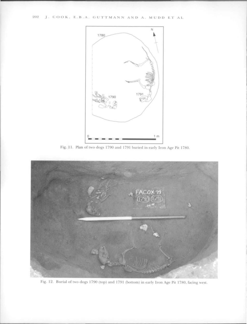 Excavations of an Iron Age Site at Coxwell Road, Faringdon - PDF on