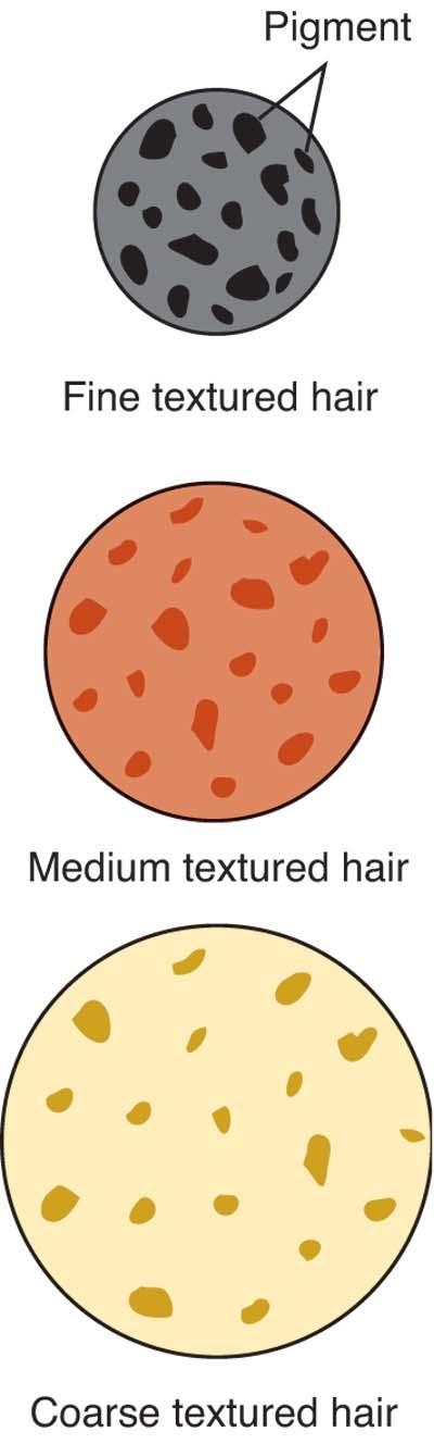 TEXTURE Fine hair pigment groups more tightly; color deposited in fine hair results in darker hair. Fine hair is less resistant to hair lightening. A milder bleach can be used.